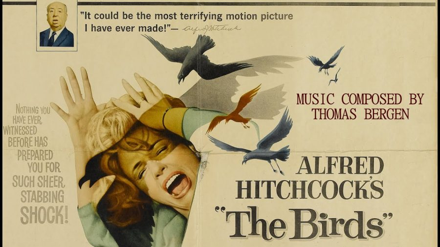 Classic Movie Review: The Birds