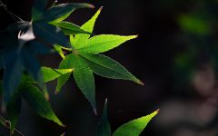 Green leaves in nature