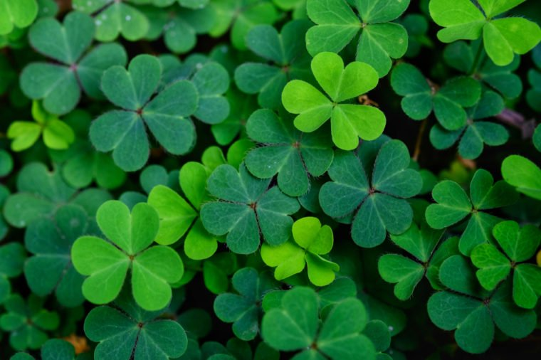 A Reflection on This Year's Saint Paddy's Day